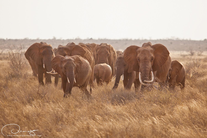 Tsavo East, Kenya, 2010